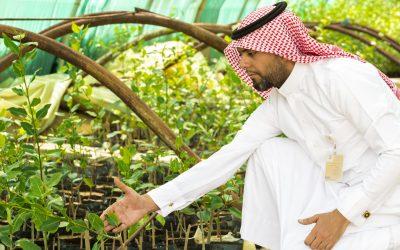أمانة الأحساء تبدأ في رسم الخطة التنفيذية لمليون شجرة