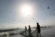 وزارة الزراعة تعلن بدء موسم صيد الربيان في البحر الأحمر