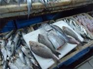 إنذار 48 محل لبيع الدواجن والأسماك واللحوم ورصد 202 مخالفة