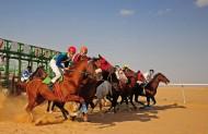 انطلاق رابع سباقات موسم ميدان الفروسية بمنطقة الجوف