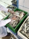 """مصادرة صادر 64 كيلو """" اسماك فاسدة """" في الهفوف"""